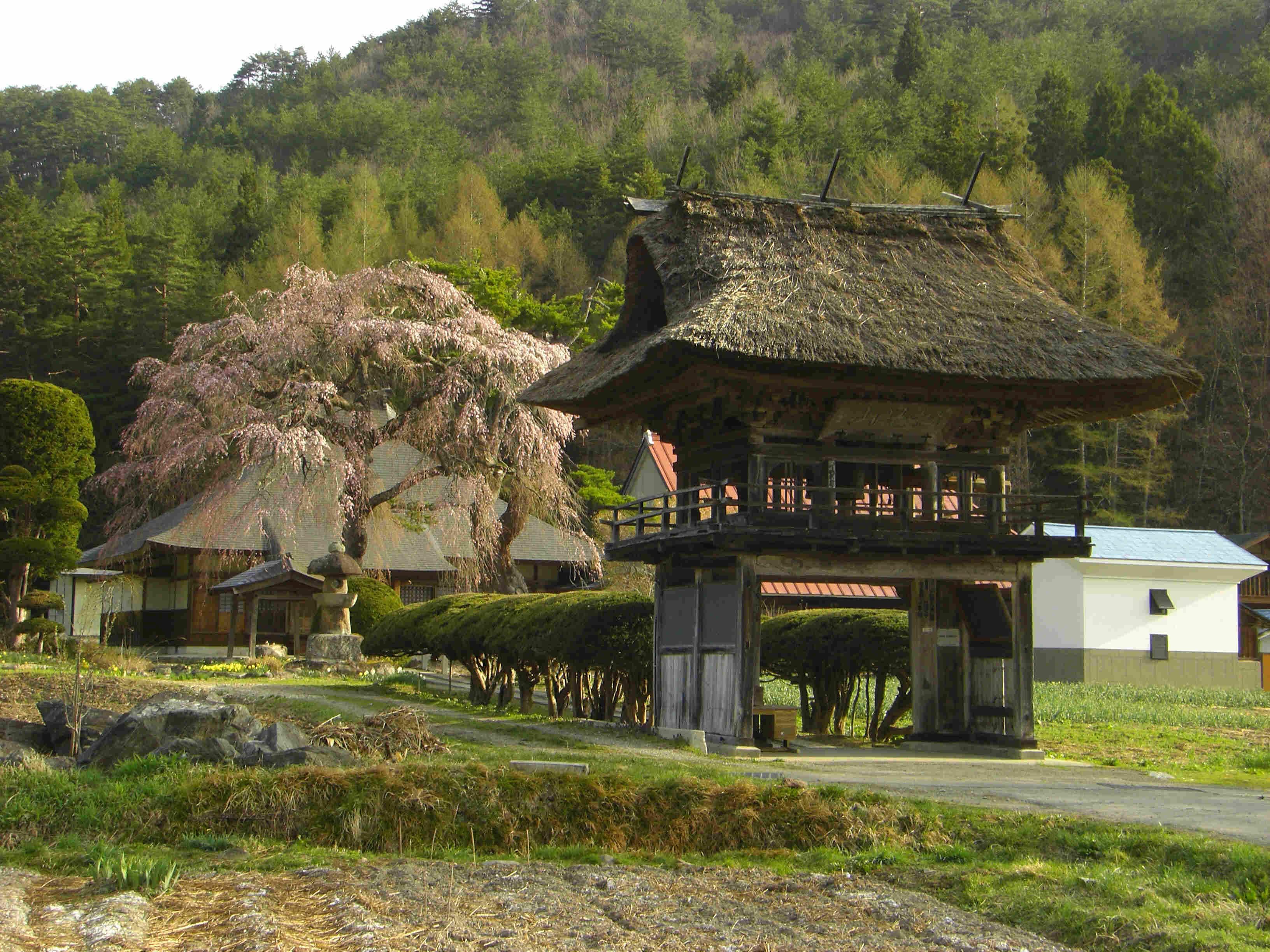 南会津の桜(南会津町 南泉寺)